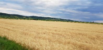 Ebene Ackerfläche mit zirka 5,3 Hektar.