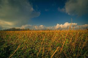 Ca. 8 ha Ackerfläche mit ca. 80 Bodenpunkte und Beregnung zu verkaufen.