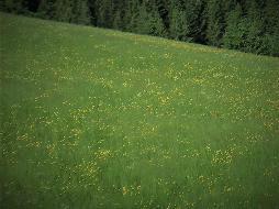 Agrarfläche am Ortsrand