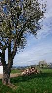 HITZENDORF: schöner, sonniger Baugrund in ebener Lage!