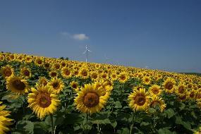 Schöne Agrarflächen gegen Gebot, sagen Sie mir wieviel Ihnen die Flächen wert sind