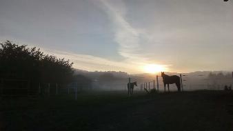 Landwirtschaftlicher Pferdeeinstellbetrieb im Bezirk Baden
