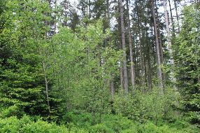 Schöner Wald zu verkaufen