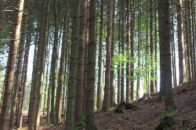 Schöner Mischwald