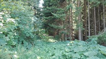 ++ Natur & Entspannung ++ Haus auf Waldlichtung  ++