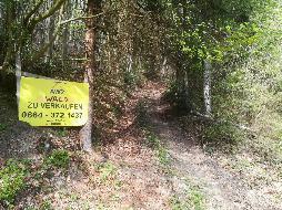 Günstiger Wirtschaftswald für Schnellentschlossene!