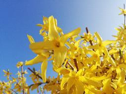 Frühling in Ebensee!!