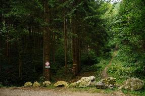 Laub- Mischwald