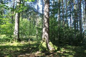 Schöne Waldfläche im Weilhartsforst