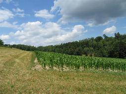 Landwirtschaftliche Fläche mit ca. 21464 m² in St.Martin/Anzing!