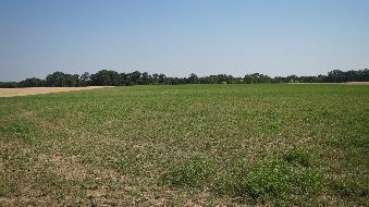 Ackerfläche mit kleinem Waldstück zu verkaufen