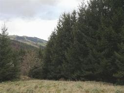 Wald und Wiese mit Hütte!